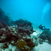 Saxon's Reef, Great Barrier Reef