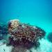 Coral Reef - Saxon's Reef