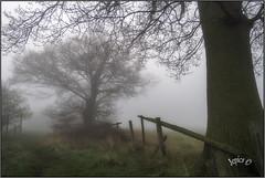 Spring Fog. (Picture post.) Tags: landscape nature green springtime fog trees fence paysage arbre brume oak