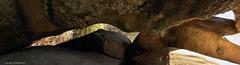 Pedres de les Orenetes (AJ Mitchell) Tags: larocadelvallès boscdecangol camídecéllecs spain catalunya takumar m42 vintagelens pedresdelesorenetes rutaprehistòricadecéllecs
