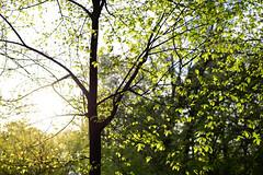 1PRO_2357 (Radu Pavel) Tags: radu radupavel pavel fotononstop cosmos ©radupavelallrightsreserved ©radupavelallerechtevorbehalten ©radupaveltodoslosderechosreservados ©radupavel版権所有 nature natur naturaleza 自然 colours farben colores 色 spring frühling primavera 春 green grün verde 緑 tree baum árbol 木 leaves blätter hojas 葉 outdoor alairelibre imfreien ルーマニア world welt mundo 世界 light licht luz 光 tranquilo ruhig geruhsam serene peaceful sunset sonnenuntergang 日没 puestadesol 2019