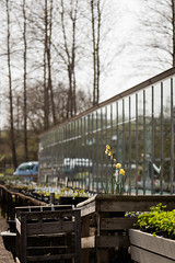 EPMG Spring Secret Herb Gardens April 2019-7 (Philip Gillespie) Tags: epmg edinburgh photography meetup group scotland canon 5dsr nature outdoor natural secret herb garden plants flowers blossom spring colour green yellow orange purple blue red shapes back light sun sky clouds grass trees park glass greenhouse nursery planting outside flower white black day pink new macro fun outing