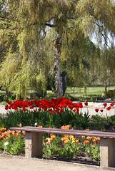 Botanischer Garten Mainz / Mainz Botanical Gardens (HEN-Magonza) Tags: botanischergartenmainz mainzbotanicalgardens rheinlandpfalz rhinelandpalatinate deutschland germany frühling springtime