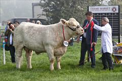 Lotta Cow (meniscuslens) Tags: bucks county show buckinghamshire aylesbury weedon grass cow event judge