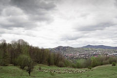_SAB1767 (popa_sebastianmihail) Tags: digital canon 1dmkiii outdoor landscape color sky moody clouds eos forest grass sheep nature meadow mountain view pasture scenery animals rural tree alpine herd animal background country trip romania carpathians livestock