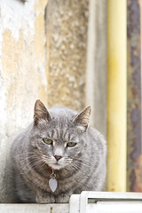 _SAB1642 (popa_sebastianmihail) Tags: digital canon 1dmkiii outdoor street cat pet feline young background animal eyes kitty portrait kitten domestic fur grey furry looking animals resting cats sitting gray
