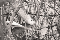 _SAB1600 (popa_sebastianmihail) Tags: bw digital plantsandnature canon 1dmkiii outdoor water lake tree white nature black landscape reflection branch monochrome mood blackandwhite trees