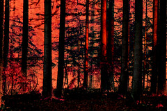 (psychedelic world) Tags: wohltorf wald wood forest rot red nature natur dark dunkel bäume trees creepy unheimlich outdoor psychedelicworld psychedelic psychedelisch sachsenwald