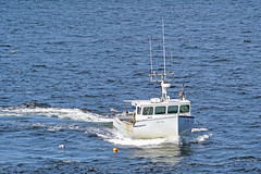 DSC03475 - Bay Bliss (archer10 (Dennis)) Tags: sony a6300 ilce6300 18200mm 1650mm mirrorless free freepicture archer10 dennis jarvis dennisgjarvis dennisjarvis iamcanadian novascotia canada glenmargaret shadbay fishing boat baybliss lobster white trap