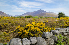 A landscape scene of the Mourne Mountains, also called the Mournes or Mountains of Mourne, County Down, Northern Ireland. (Stephen_Lavery) Tags: mountain natural beauty range rock boulder peaks troughs grass rugged terrain landscape scape granite gorse trees blue sky ground wall stone springtime sunshine sunny bright