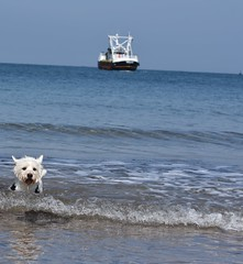Nothing spells Scotland like a westie and a trawler 😂 (mccarrellkyle) Tags: boat sea borders scottish scotland eyemouth dog terrier white highland west