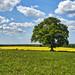 tree Near Winchester