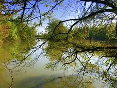 IMG_6537x (gzammarchi) Tags: italia paesaggio natura ravenna marinaromea puntealberete lago albero cornice impressionista