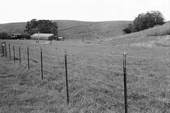 Pescadero (kuronakko) Tags: leicam5 rangefinder leicasummiluxm50mmf14lens preasph e46 kodaktmaxp3200 film blackandwhite bw pescadero farm grass hills sky iso 3200 iso3200
