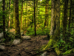 The Quiet Place (James Korringa) Tags: greatsmokymountainnationalpark forest woods trees green moss rocks