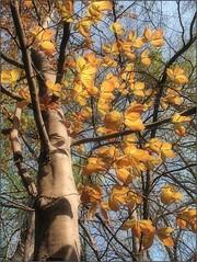 (Tölgyesi Kata) Tags: botanikuskert botanicalgarden füvészkert budapest withcanonpowershota620 spring tavasz tree fagus