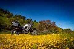 IMG_0213 (jde95tln) Tags: carrizo plain national monument super bloom 2019