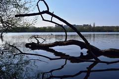Reflected branch at Kings Mill (LMW76) Tags: kings mill reservoir sutton ashfield mansfield nottinghamshire spring april 2019 sunny water reflection tree branch hospital blue sky
