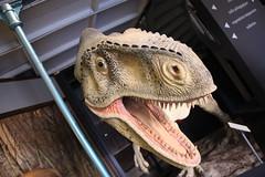T-Rex (Sp6mEn Pics) Tags: taxidermie animaux empaillés disparus vivants lille france hautsdefrance nord lynx araignée loup dinosaure oiseau squelettes mammifère marin momie insects