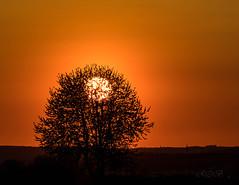 Sunset-28369-20190419.jpg (CitizenOfSeoul) Tags: abendstimmung badenwürttemberg sunset sonnenuntergang wiunderbar licht lichtstimmung himmel kreisludwigsburg
