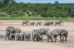 BK0_6829 (b kwankin) Tags: africa elephant ruahanationalpark tanzania