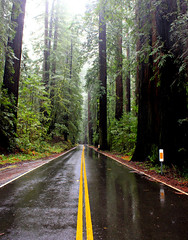 Winter road (Eduardo Ruiz M.) Tags: redwood sequoia road winter rain wood california mountain nature landscape