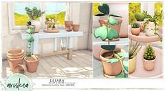 N21- Ariskea - Lliara (ariskea) Tags: decor spring ariskea new n21 plant succulent