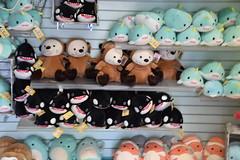 DSC_9366 (earthdog) Tags: 2019 nikon d5600 nikond5600 18300mmf3563 needstags needstitle themepark amusementpark greatamerica santaclara shopping shop store animal stuffedanimal softie