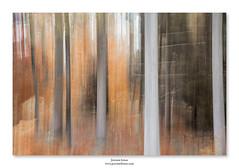 La forêt enfloutée ... (jeremie.brion) Tags: forêt nature bois arbre flou filé