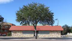 Tree of abandoned liquor store of 1980 stone veneer in Florida. (Tim Kiser) Tags: fourthavenue sunny 13thstreet alachuacounty 1980architecture early1980sstoneveneer northflorida northcentralflorida florida gainesvilleflorida citytree 2017 emptyparkinglot tree parkinglot stoneveneer 4thavenue ushighway441 northernflorida 13thand4th december northwestfourthavenue 1980 northwest4thavenue abcliquor alachuacountyflorida parkingspaces img8900 december2017 1980building streettree gainesville 1980sbuilding abandonedbuilding formerliquorstore vacantbuilding urbantree vacantstore sidewalktree newyearseve liquorstore ornamentaltree 1980scommercialbuilding 20171231 us441 1980s commercialbuilding northwest13thstreet 1980sarchitecture abandonedstore usroute441
