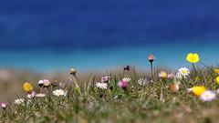Flowers on the Saint Pabu dunes (patrick_milan) Tags: flowers macro dune saint pabu finistere bretagne cof65 cof065mari cof065mark cof065lep cof065dmnq ccof065nico