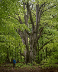 Impressed by a tree (Pascal Riemann) Tags: hessen baum landschaft person pflanze sababurg buche wald natur deutschland germany landscape nature outdoor forest plant