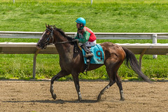 Secret Secret (Whitacre, Grant) (avatarsound) Tags: boston suffolkdowns horse horseracing horses jockey jockeys race racetrack racing rider riding sport