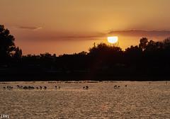 El Rocío (JaviJ.com) Tags: andalucia huelva sunset puesta de sol flamencos birds lake laguna lago trees contraluz paisaje landscape sun clouds nubes javijlandscape charco la boca doñana parque regional