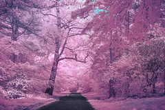 Infrared park (Dhina A) Tags: sony nex7 fullspectrum converted infrared ir 590nm variotessar t fe 1635mm f4 za oss sel1635z heliopan orange 22 coated filter slim park garden trees