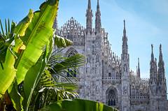 Milan - Duomo (photos by ali) Tags: italy italia milan milano duomo palmtrees trees palm z6 nikon nikonz6