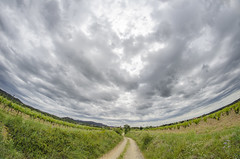 Between vineyards, the path and the sky (Santini1972) Tags: fisheye sky vineyard landscape clouds nikon samyang 8mm nature village catalonia garriguella