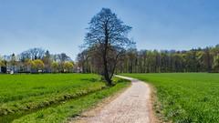 Aprillandschaft 😀 München Lochhausen 2 (Chridage) Tags: baum bäume lochhausen münchen munich bayern landstrase gras feld park himmel