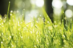 Il giudizio di Dio è amore (eshao5721) Tags: alberi erba lafedeindio lavocedidio dioonnipotente creatore lachiesadidioonnipotente laverità dioèamore dio chiesa