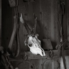 In the old house (Geir Bakken) Tags: trophy hunt skull ilford ilfordhp5 mamiya mamiyarb67 mediumformat vintagecamera blackandwhite fomadon lqn film filmisnotdead filmphotography filmcamera analog analogue analogphotography