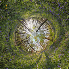 Bluebell Tunnel (Rob Pitt) Tags: parrot anafi drone tunnel 360 panorama bluebells wirral rspb burton mere wetlands