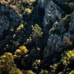 'Center of Attention' (Canadapt) Tags: tree cliff rock forest square casaldesãosimão portugal canadapt
