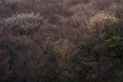 20190416a73_7289 (Gansan00) Tags: ilce7m3 α7ⅲ sony japan 大分 oita 日本 九重連峰 登山 landscape snaps ブラリ旅 04月 fe24105f4 trekking travelphotography