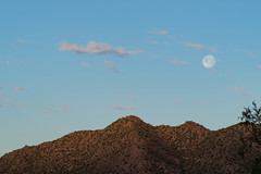 The Moon (greenschist) Tags: morning santanmountainregionalpark ironwoodtree sonorandesert mountain usa cactus arizona saguaro pinalcounty moon clouds
