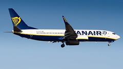 Boeing 737-8AS(WL) EI-GJH Ryanair (William Musculus) Tags: frankfurt am main rhein fraport frankfurtmain fra eddf airport flughafen spotting airplane plane aviation eigjh ryanair boeing 7378aswl ryr fr 737800
