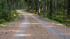 road (©Andrey) Tags: road forest outdoor lettonie latvia ligatne away way green colour spring day sonnartfe1855 sel55f18z perspective лесная дорога асфальт шишки весна природа
