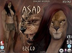 Asad avatar breed (Alea Lamont) Tags: ndmd asad lion avatar omega skin appliers catwa vista signature belleza male head body slink ak