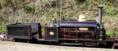 "1883 Hunslet 0-4-0ST ""Lillian"" (kitmasterbloke) Tags: launceston cornwall steamrailway vintage veteren museum tourist narrowgauge train railway steam locomotive"
