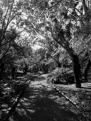 mull of galloway logan botanic garden-4131555 (E.........'s Diary) Tags: eddie ross olympus omd em5 mark ii spring 2019 logan botanic garden dumries galloway mull mono black white plants botanics