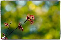 Frühling 2019 (RiesenFotos) Tags: frühling primavera spring printemps riesenfotos 2019